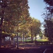 ✨スクールの目の前は公園です✨