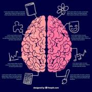❗️The right brain left brain❗️